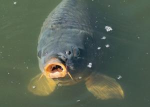 fish-1755473_1280